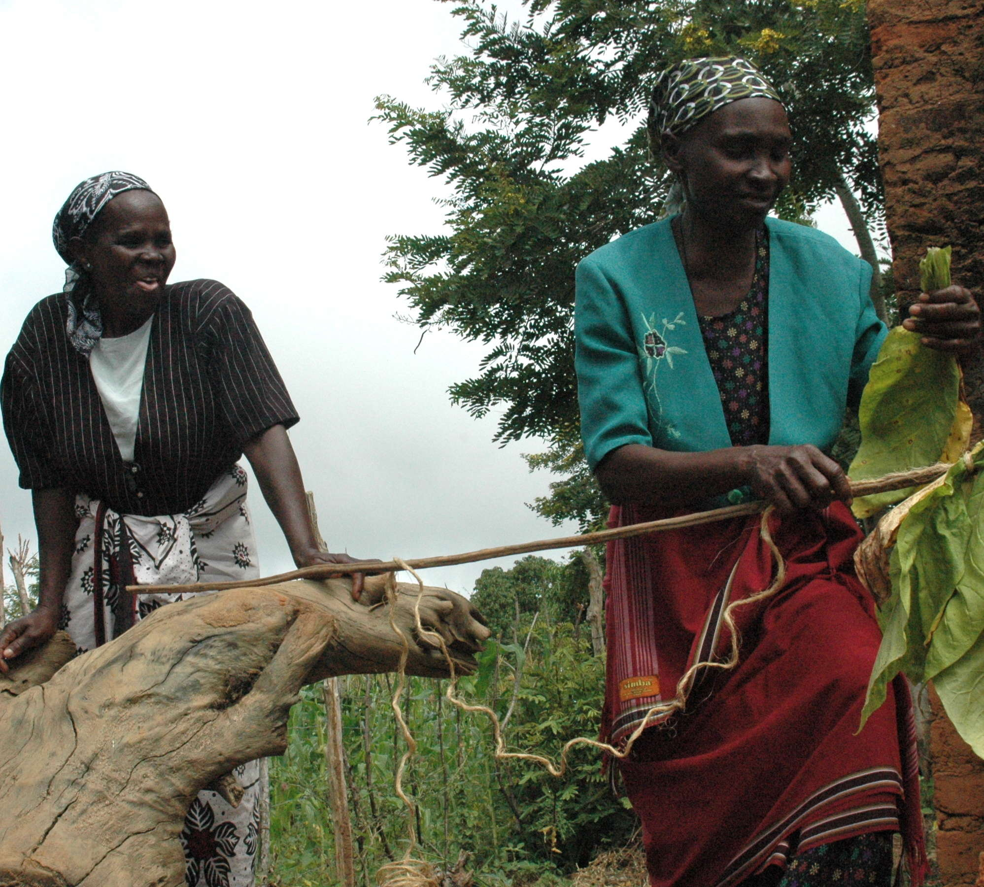 In Kenya, agricultural experts use low-tech methods to maximize yield and productivity. Photo GKI.