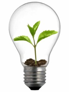 Picture of a lightbulb with a plant growing inside of it