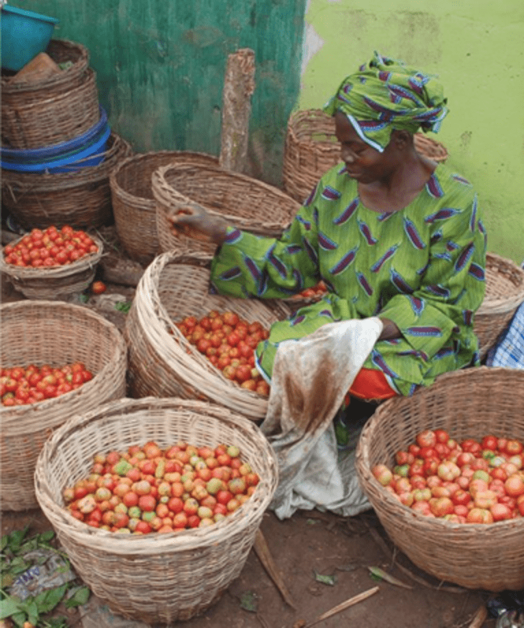 Women sifting through tomatoes ready to sell to customers